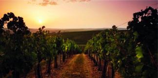 Great Wine Capitals